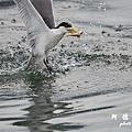 大溪漁港0625D7000 082.JPG