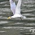 大溪漁港0625D7000 097.JPG