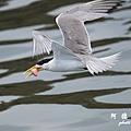 大溪漁港0626D7000 054.JPG