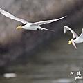 大溪漁港0626D7000 123.JPG