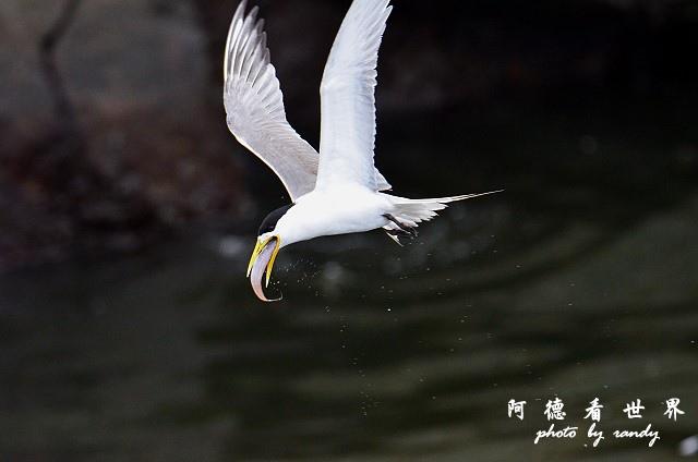大溪漁港0626D7000 141.JPG