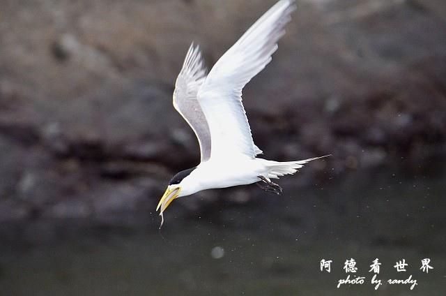 大溪漁港0626D7000 142.JPG