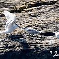 大溪漁港0630D7000 033.JPG
