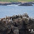 大溪漁港0630D7000 123.JPG