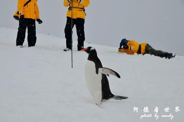 南極5D7 085.JPG