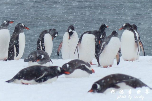 南極5FZ (7).JPG