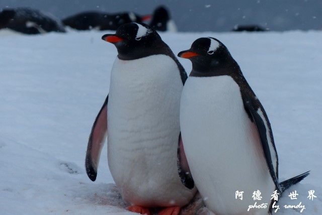 南極5FZ (112).JPG