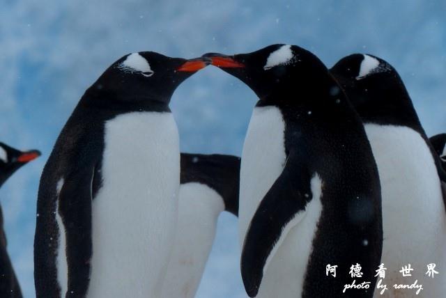 南極5FZ (298).JPG