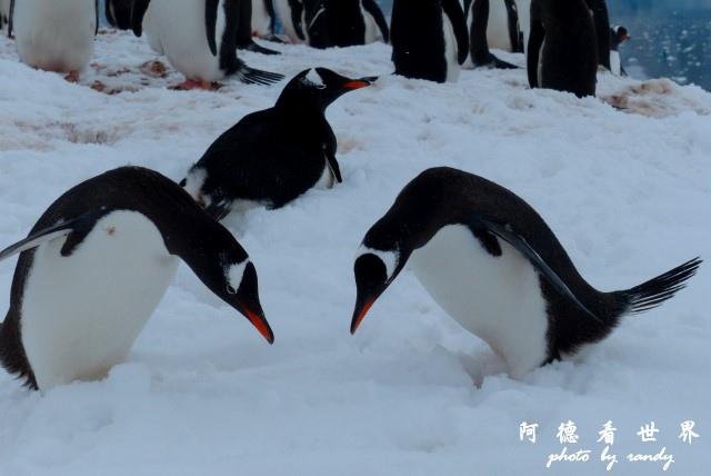 南極5FZ (436).JPG