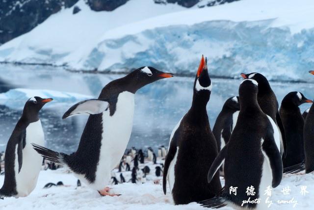 南極5FZ (521).JPG
