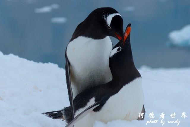 南極5FZ (494).JPG