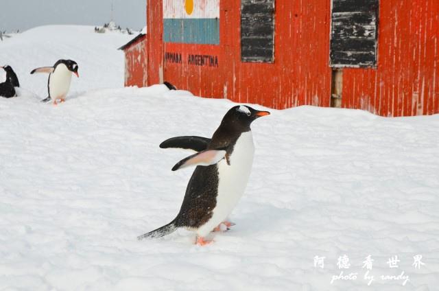 南極6D7 008.JPG