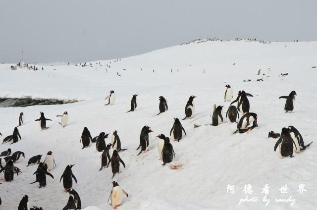 南極6D7 012.JPG