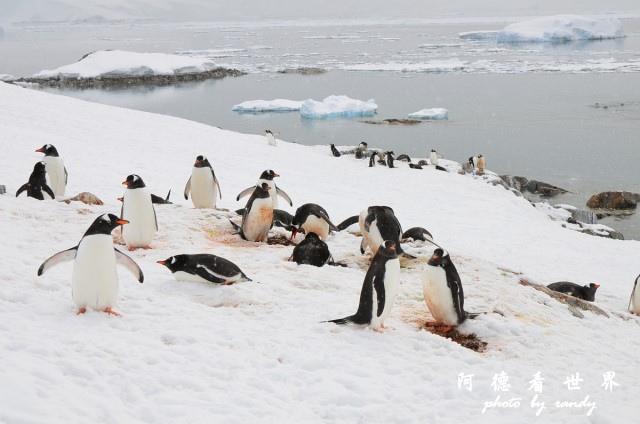 南極6D7 077.JPG