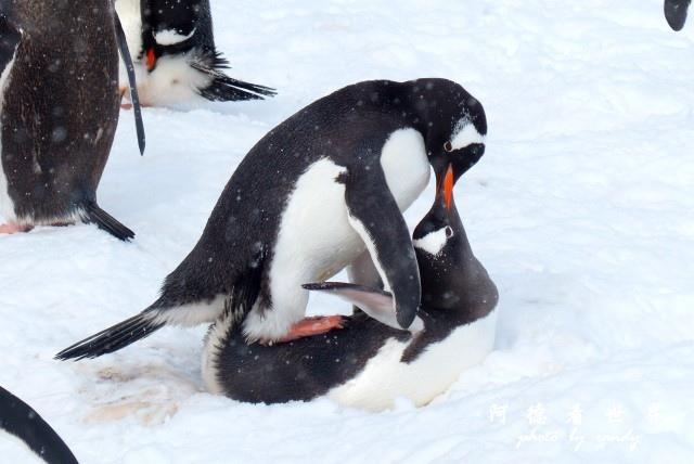 南極6FZ (15).JPG