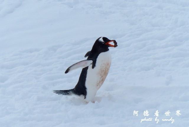 南極6FZ (49).JPG