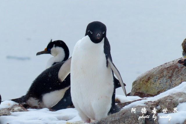 南極6FZ (56).JPG