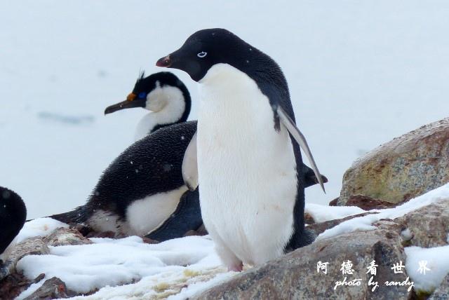 南極6FZ (57).JPG