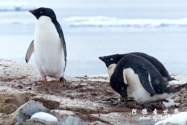 南極6FZ (65).JPG