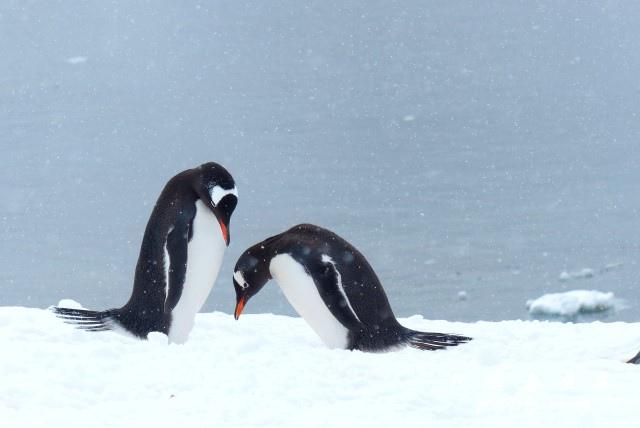 南極6FZ (94).JPG