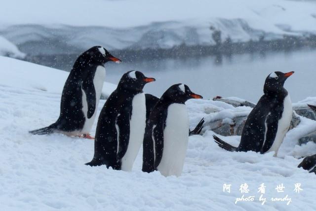 南極6FZ (127).JPG