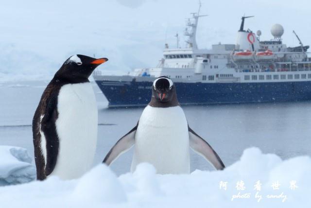 南極6FZ (143).JPG