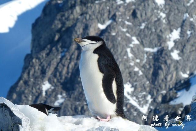 南極7FZ (224).JPG