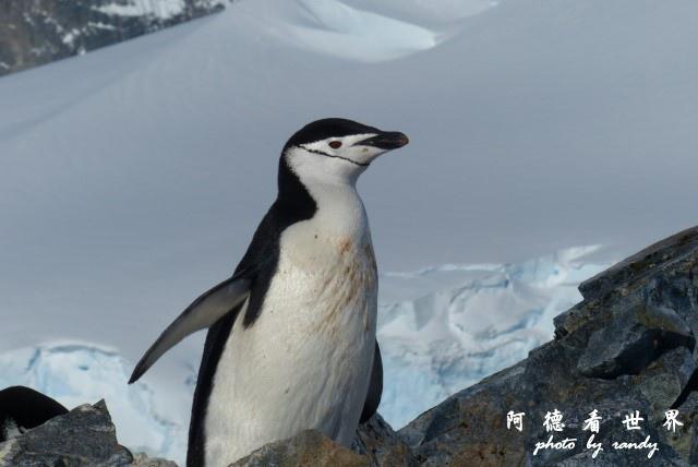 南極7FZ (240).JPG