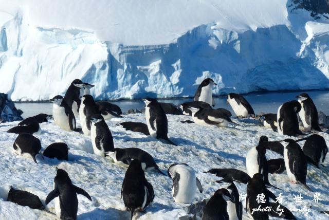 南極7FZ (256).JPG