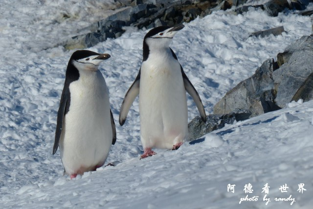 南極7FZ (304).JPG