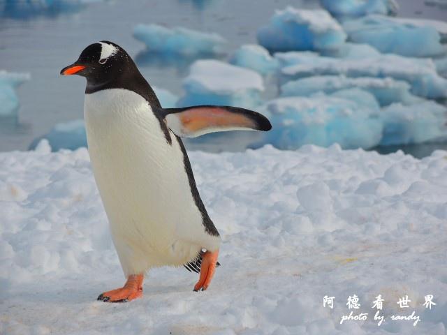 南極7P77 113.JPG