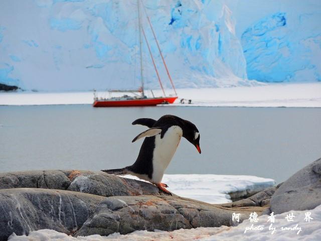南極7P77 147.JPG