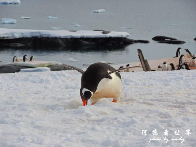 南極7P77 118.JPG