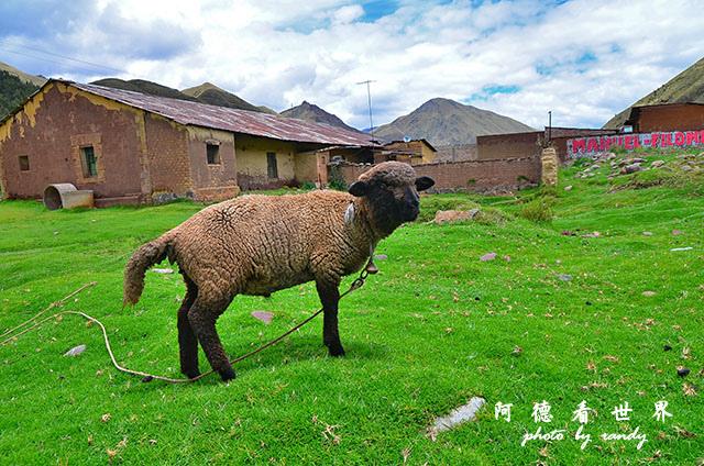 cuzco1D7 175.JPG