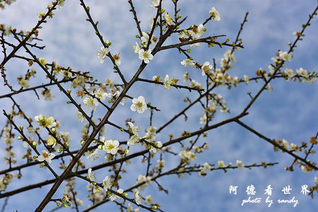 梅山公園D810 023.JPG