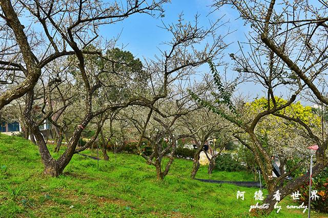 梅山公園D810 029.JPG