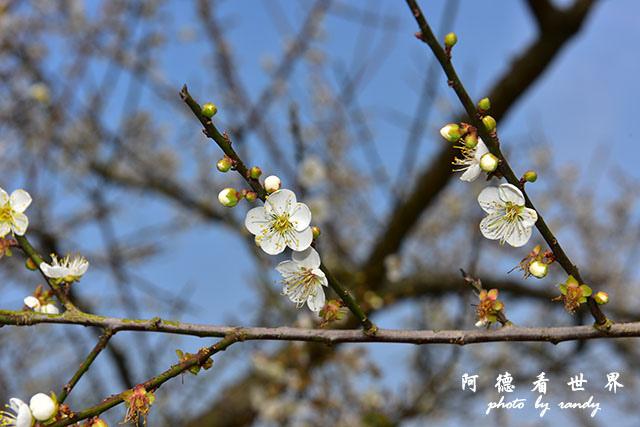 梅山公園D810 031.JPG