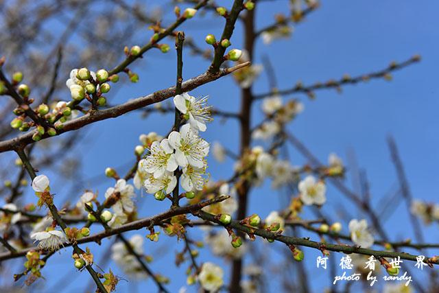 梅山公園D810 034.JPG