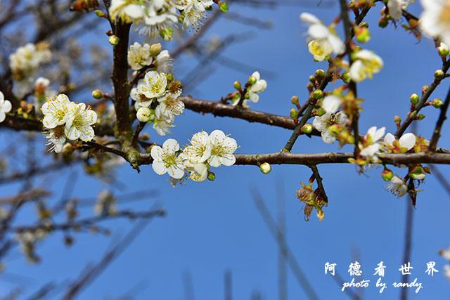 梅山公園D810 038.JPG