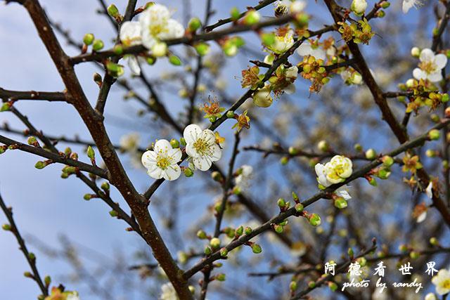 梅山公園D810 039.JPG