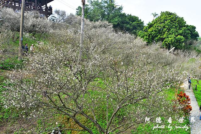 梅山公園D810 070.JPG