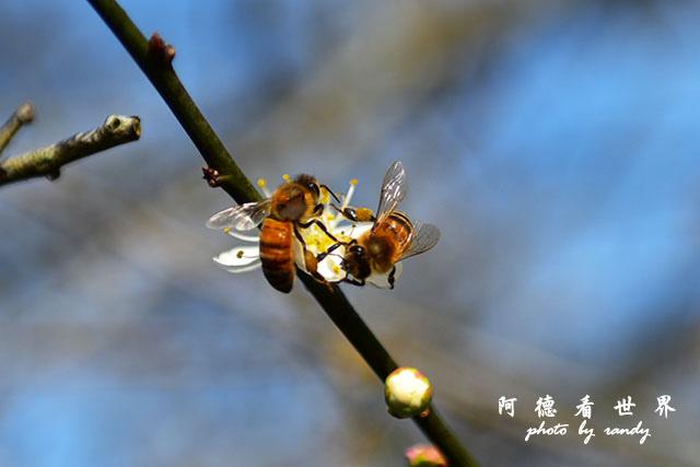 梅山公園D810 165.JPG