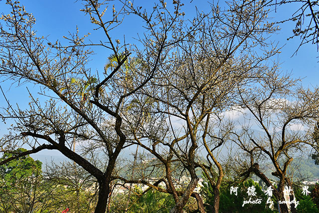 梅山公園D810 181.JPG