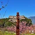 福壽山農場D810 005.JPG