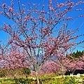 福壽山農場D810 014.JPG