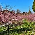 福壽山農場D810 021.JPG