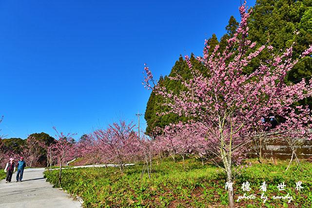 福壽山農場D810 030.JPG