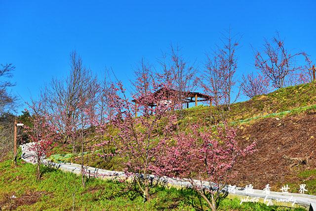 福壽山農場D810 033.JPG