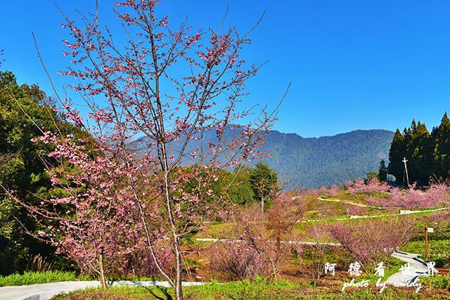 福壽山農場D810 038.JPG