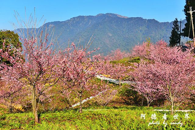 福壽山農場D810 046.JPG